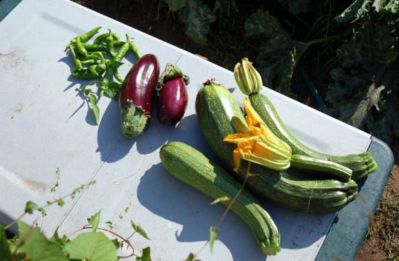 verdure di Giggino