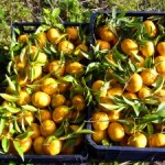 mandarini-300x225