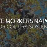 TREE WORKERS NAPOLI